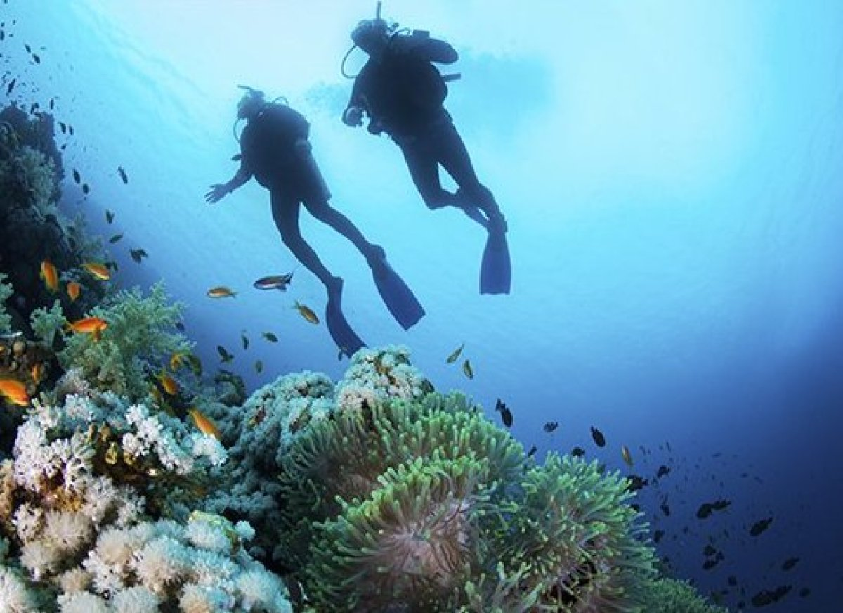 Caribbean Diving: The Most Amazing Caribbean Diving And Snorkeling Sites