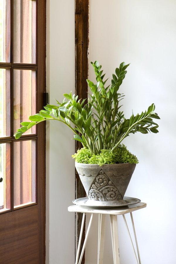 ces plantes d 39 int rieur sont peu pr s increvables. Black Bedroom Furniture Sets. Home Design Ideas