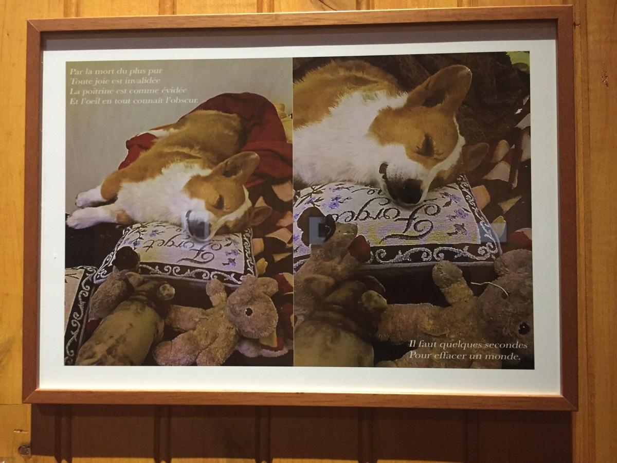 michel houellebecq a fait de son chien la star de son expo rester vivant au palais de tokyo. Black Bedroom Furniture Sets. Home Design Ideas