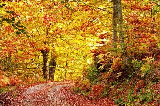 10 paisajes para disfrutar del oto o sin salir de espa a - Imagenes paisajes otonales ...