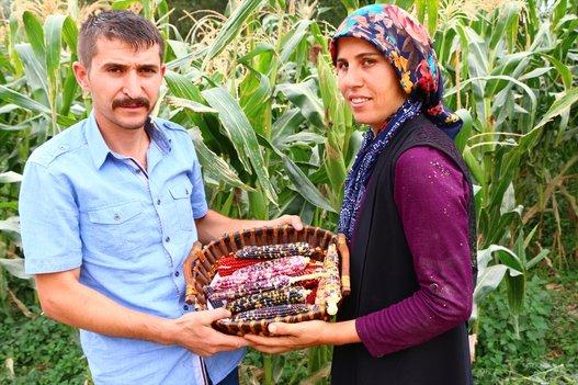 شاهدها في فيلم وثائقي فبدأ رحلة البحث عنها حتى جلبها إلى أرضه.. مزارع تركي ينتج ذرة بتسعة  Slide_523792_7390720_compressed