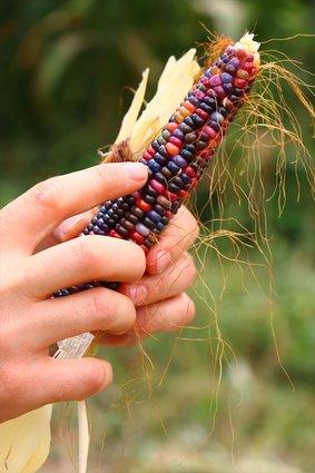 شاهدها في فيلم وثائقي فبدأ رحلة البحث عنها حتى جلبها إلى أرضه.. مزارع تركي ينتج ذرة بتسعة  Slide_523792_7390726_compressed