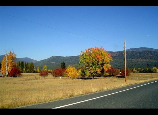 Fall Colors, Ione, WA
