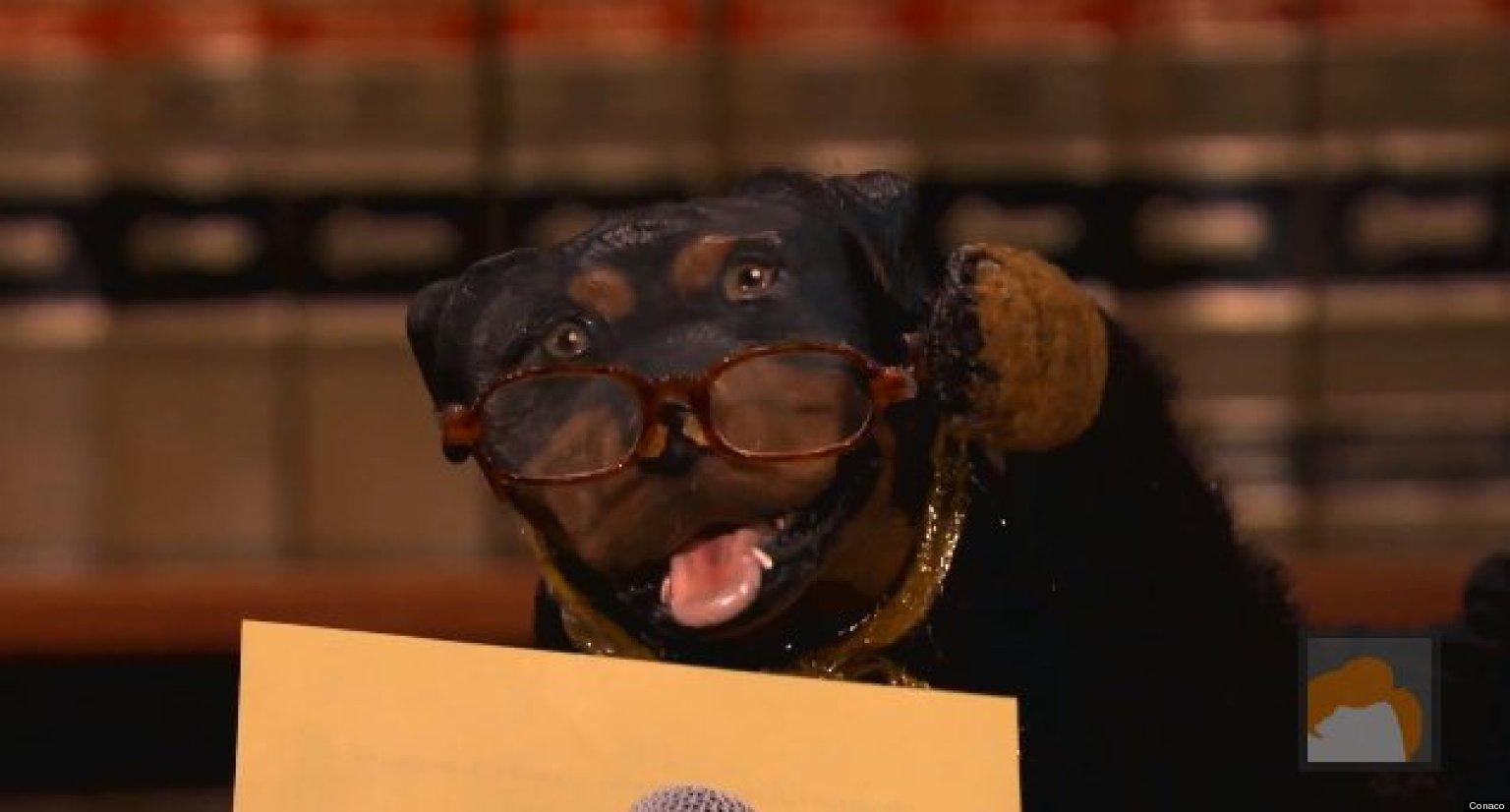Triumph The Insult Comic Dog Sues Carnival Triumph Video Huffpost
