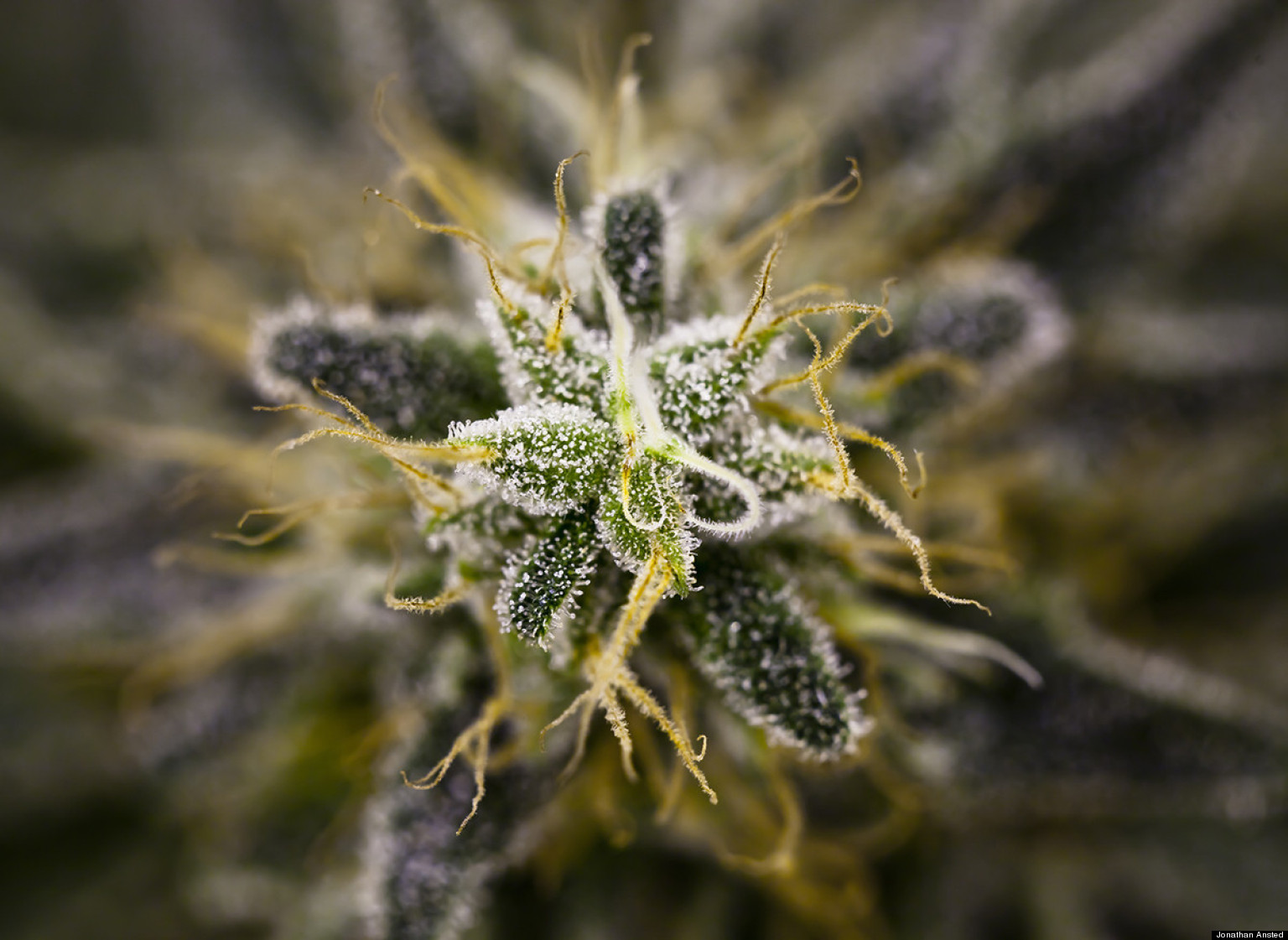 Marijuana Porn: Check Out These Gorgeous Shots Of Weed
