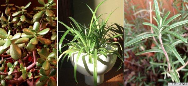 baby proof plants