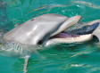 Dolphin Names: Signature Whistles Suggest Animals Greet Each Other