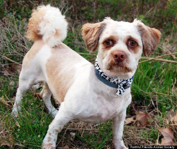 chuchi dog looks like steve buscemi