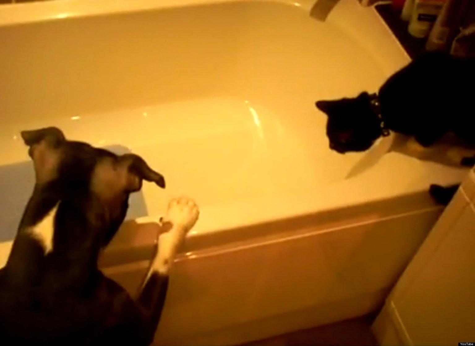 Dogs Taking Baths Dog Pushes Cat Into Bath