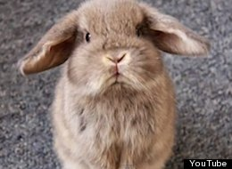 This Rabbit's Pissed At You
