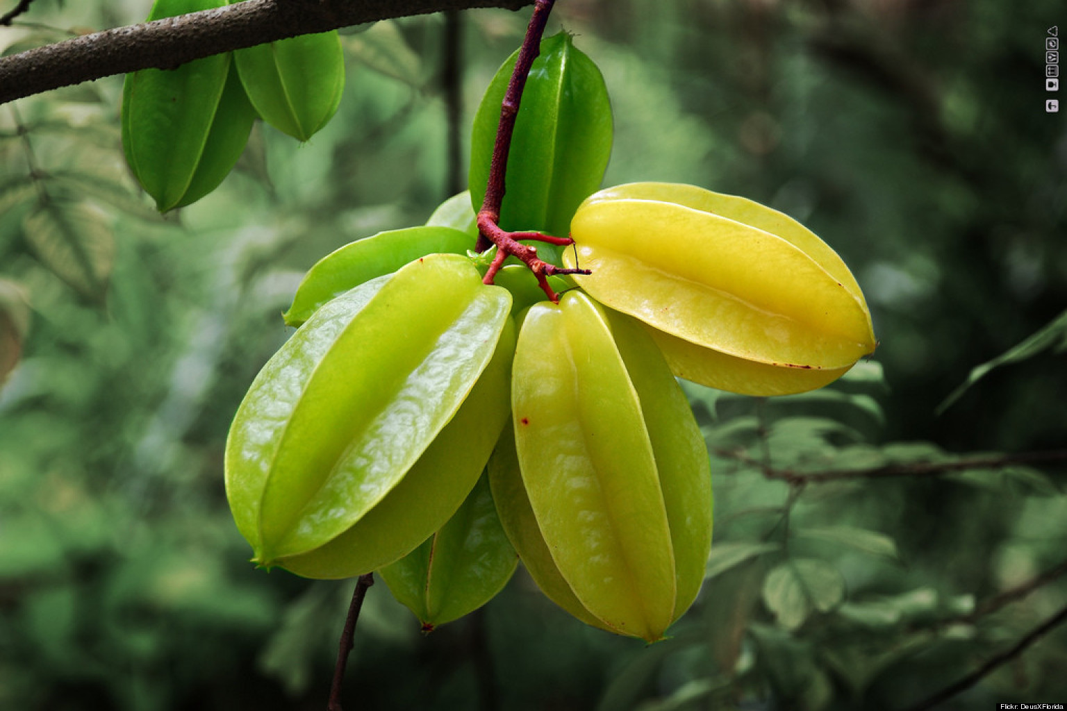 star fruit taste ginger fruit