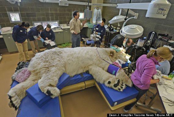 polar bear examination