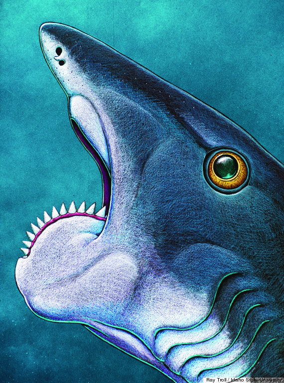 helicoprion shark chainsaw teeth