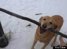Dog Dumb As A Stick