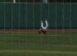 Brett Williams Catch: N.C. State Outfielder Makes Incredible Diving Grab (VIDEO)