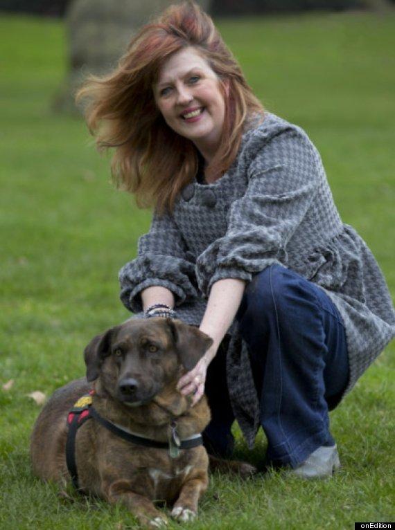 brin stray dog saves british soldiers