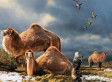 Camel Fossils Found In Arctic Suggest Ancient Creatures Roamed Region 3.5 Million Years Ago