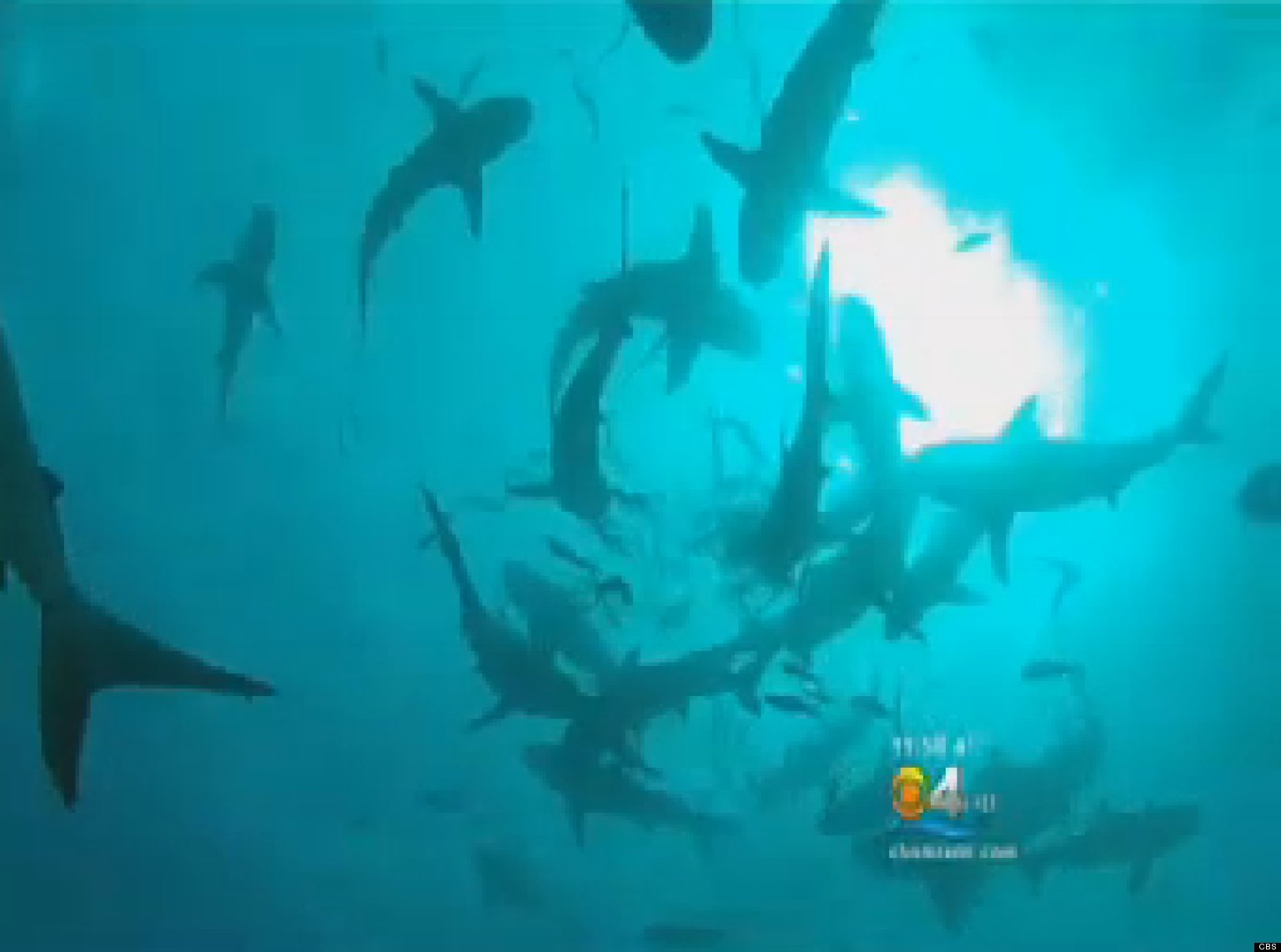 SHARKS-SOUTH-FLORIDA-facebook.jpg