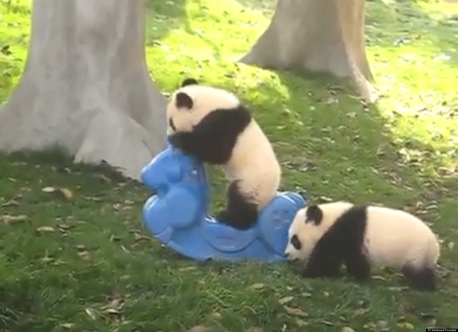 Animals Playing With Toys And Gadgets Made For Humans Videos