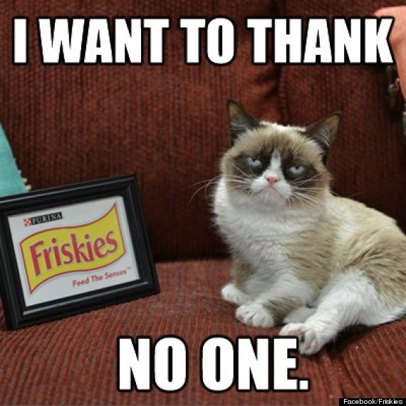 grumpy cat friskies