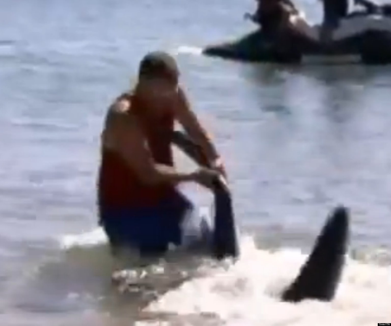 paul marshallsea fired for wrestling shark in australia