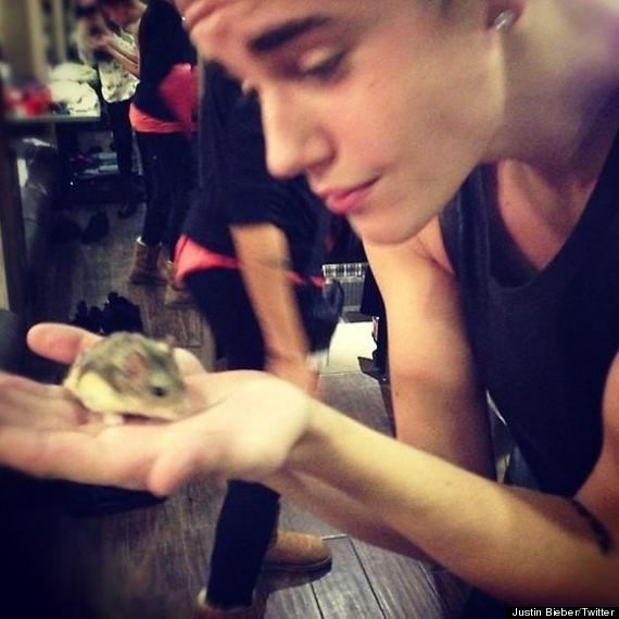 justin bieber hamster dead