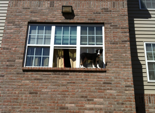 dog on window ledge