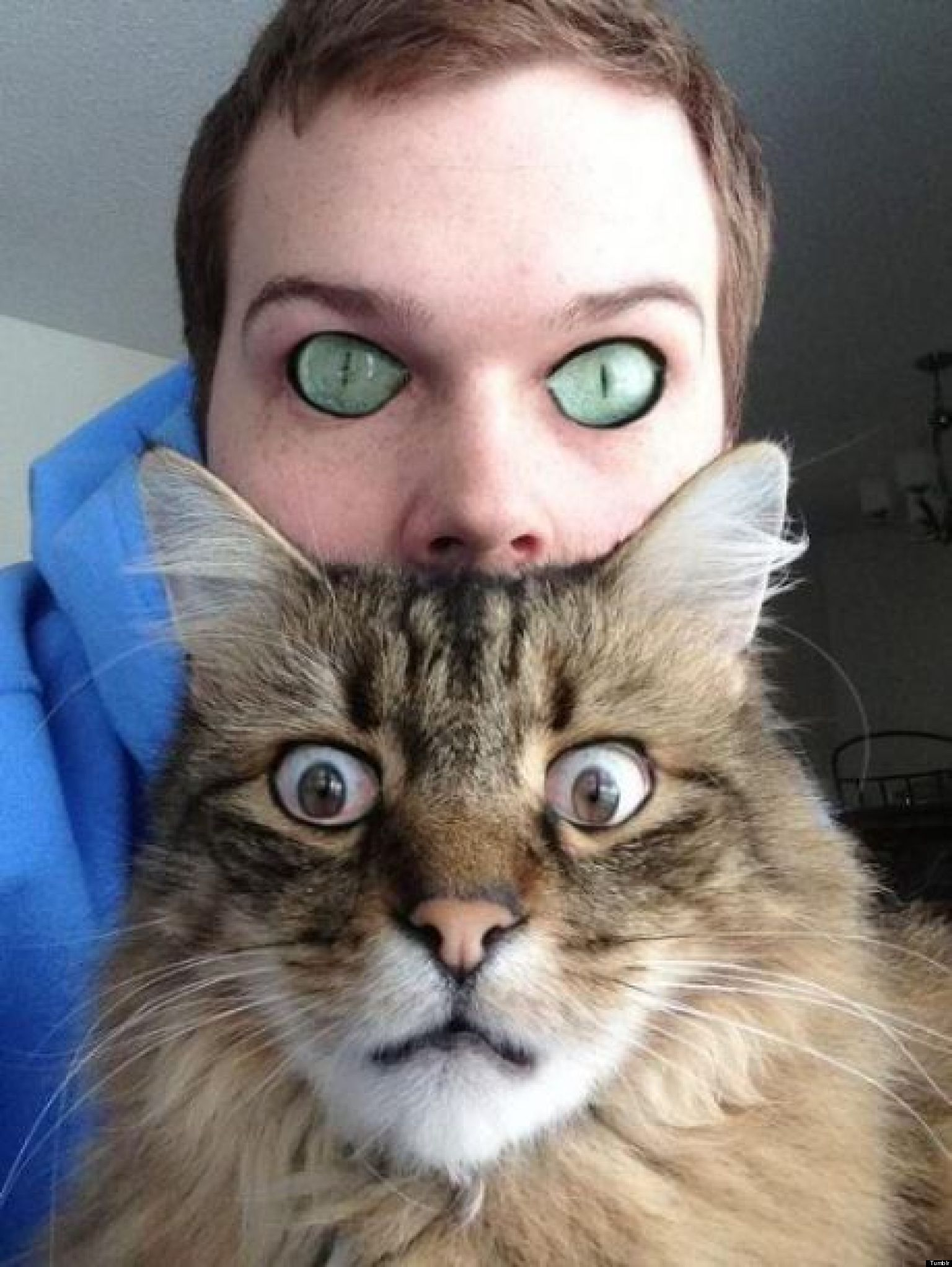 Humans With Cat Eyes Cat And Human Eye Swap Will