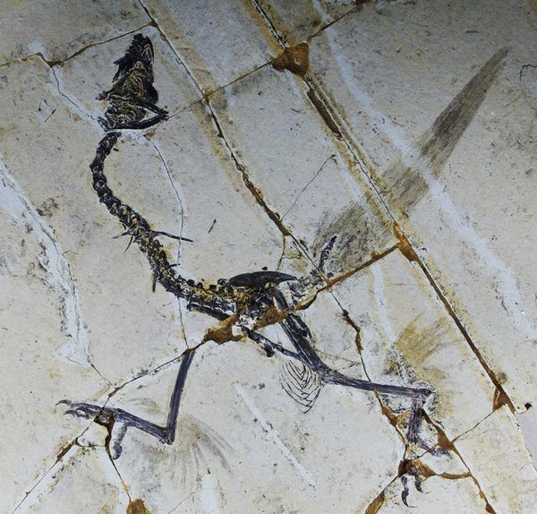 Ancient Birds Had FOUR Wings?