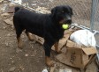 Bruno, Last Dog Homeless After Hurricane Sandy, Finally Gets New Home (PHOTOS)