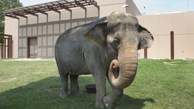 National Zoo S Elephant Trails Gives Animals More Room To