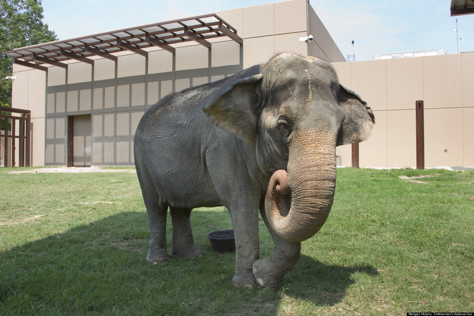 National Zoo's Elephant Trails Gives Animals More Room To ...