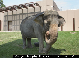 National Zoo's Elephants Get $56 Million New Home