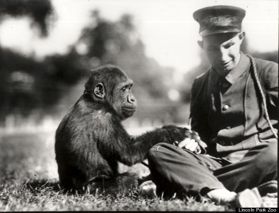 bushman gorilla