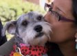 Alma Dominguez's Lost Dog, Leia, Found After 2 Years And 700 Miles; Owner And Pet Reunited