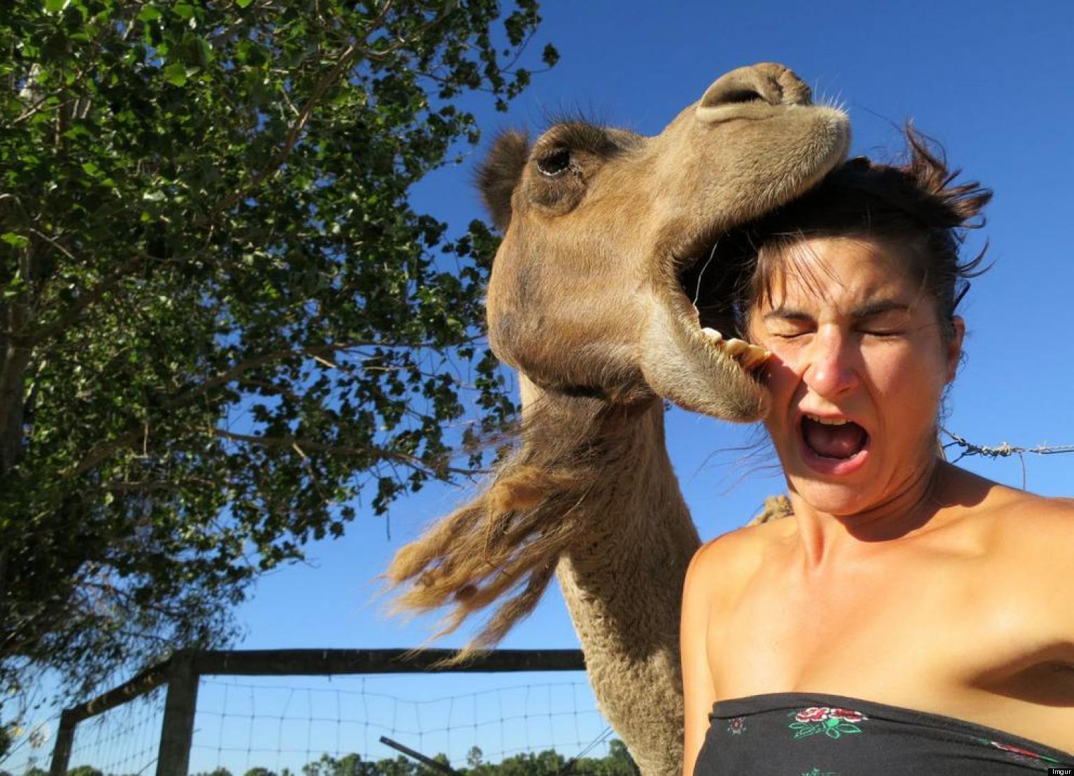 Camel selfie facebook