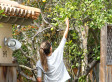 Alessandra Ambrosio And Daughter Anja Show Off Their Gardening Skills By Picking Lemons (PHOTOS, VIDEO)