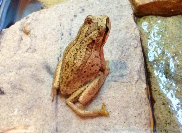 five legged frog