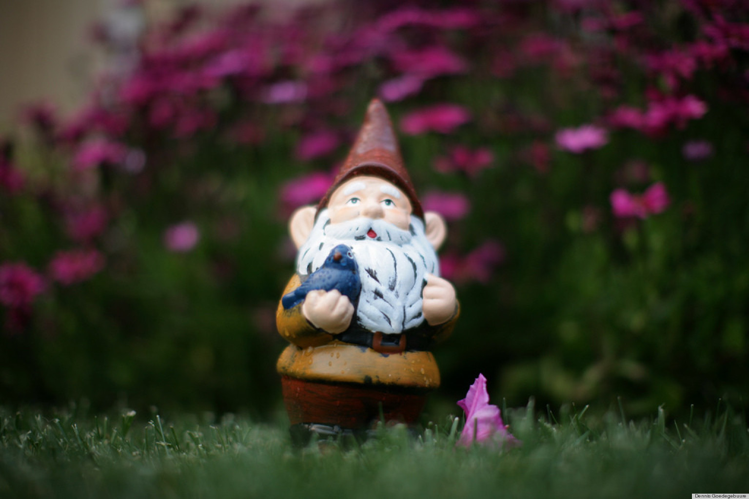 Gnome Garden: 10 Adorable Garden Gnomes That Are Protecting Yards All