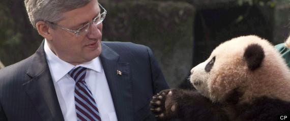 GIANT PANDAS CANADA