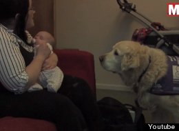WATCH: Service Dog Helps Mom Change Diapers