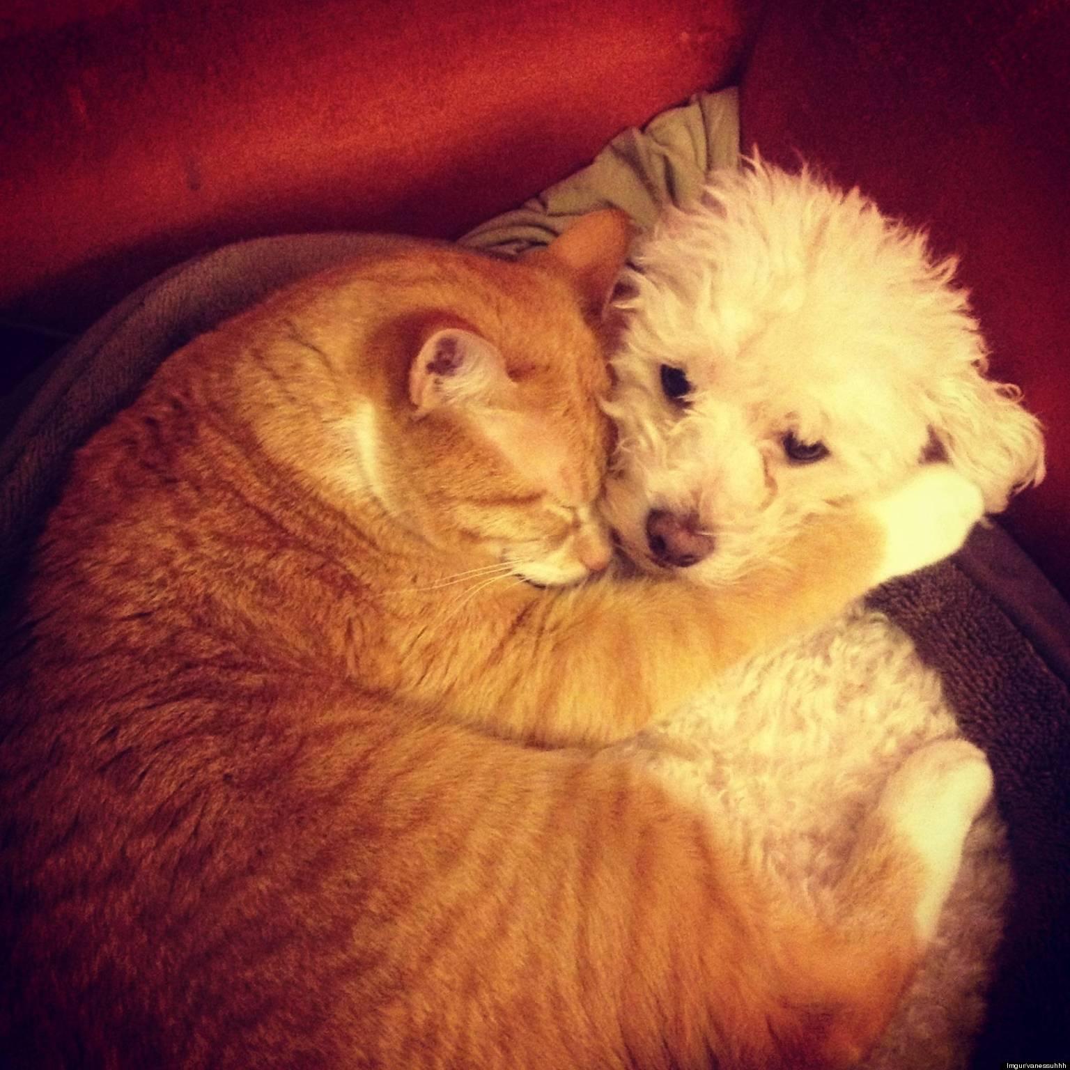 cat hugs dog rescued  oregon animal shelter photo Minimum Wage Raise Ca