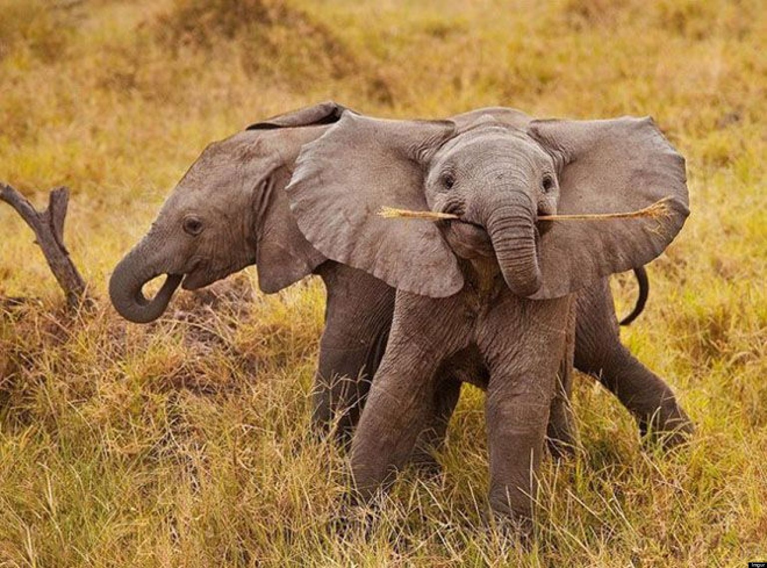 Elephant newborn baby - photo#24