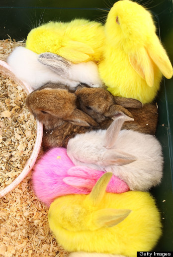 Baby Rabbits And Chickens Abandoned After Easter