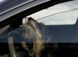 Dog Put Car In Drive, Hit, Injured York, Pennsylvania Man: Police