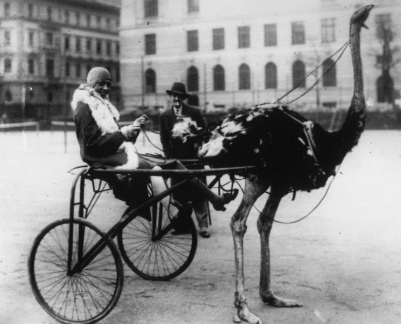 Josephine baker had an ostrich carriage photo huffpost for Josephine baker paris