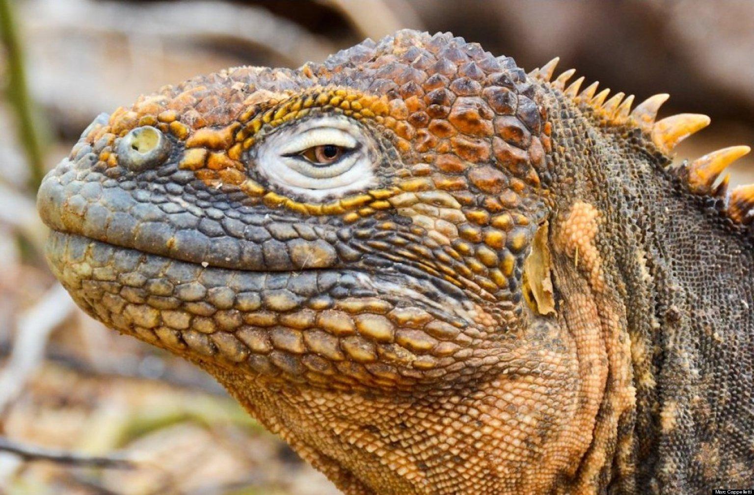 iguana eye painting - photo #4