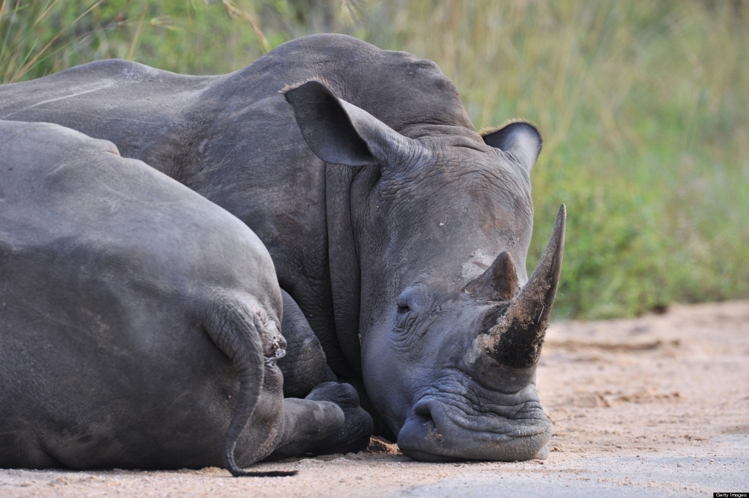Rangers Kill Suspected Rhino Poachers In South Africas