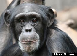 Primate Brain Study Sheds Light On Human Smarts