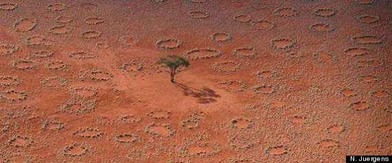 FAIRY CIRCLES DESERT